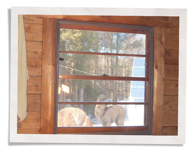 Window Comfort For A Vermont Log Cabin