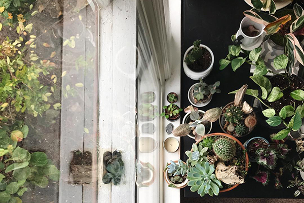 plants next to the window are a meditation room essential